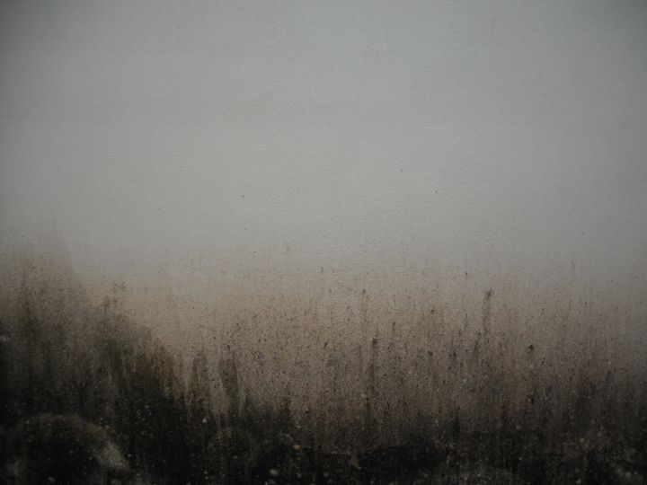 Mould on white wall - Simon Goodwin