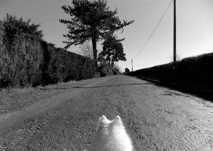 Dog Walk - S Koning
