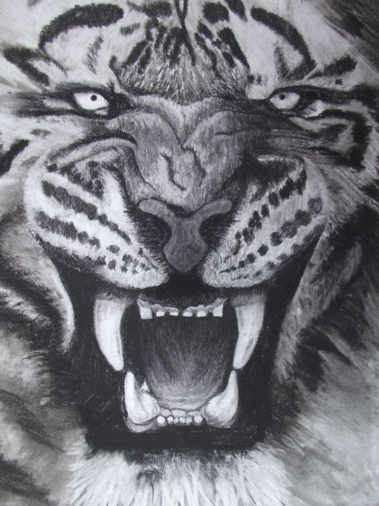 Tiger Face! - Spannings Gallery