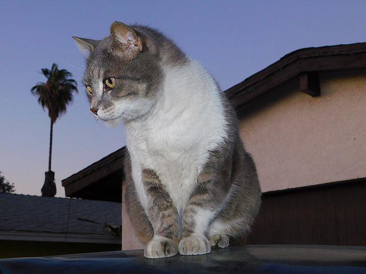 Cute Cat Photos - Jeronimo Rubio