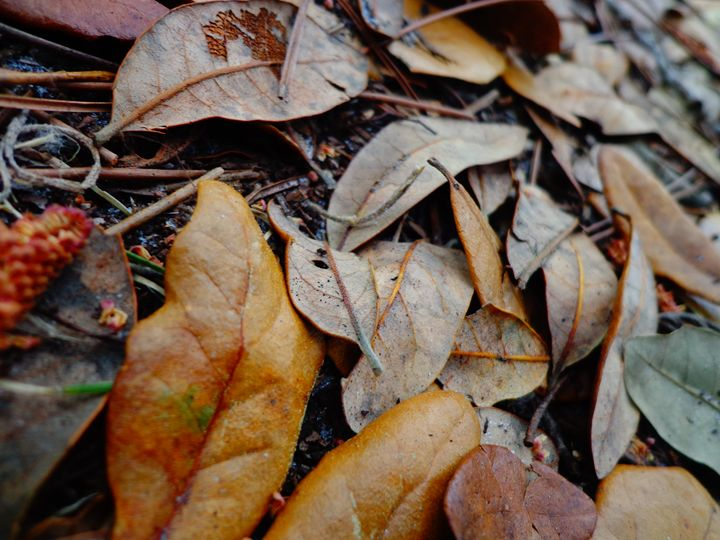 Leaves - CraftiColor