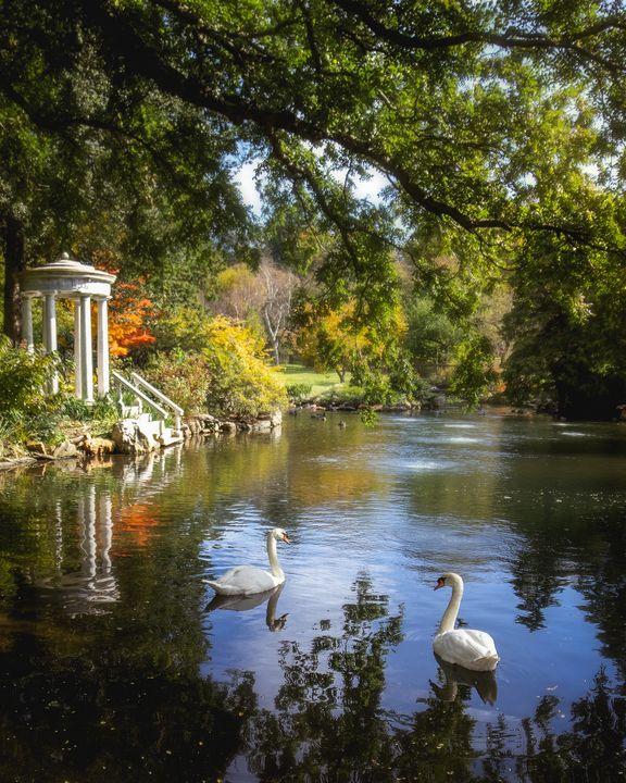 Two Swans at Morris Arboretum - James Tralie