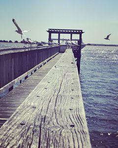 Dock of Seagulls - K. Herring