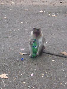 Monkey drinking Sprite