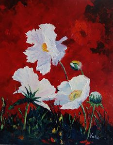 White on Red Poppies