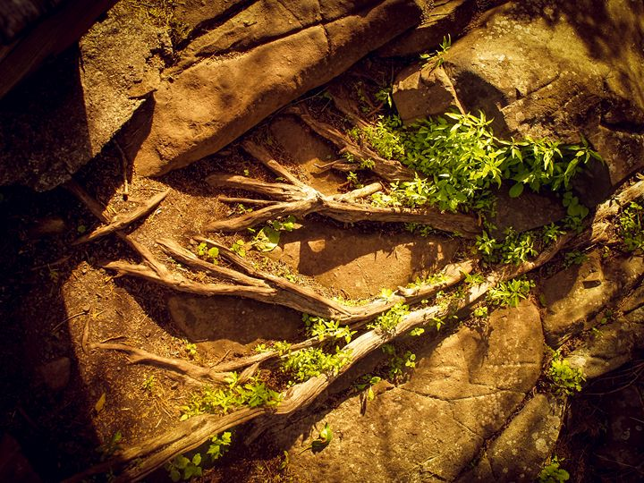 Nature Finds a Way - TerraScapes Fine Art and Photography