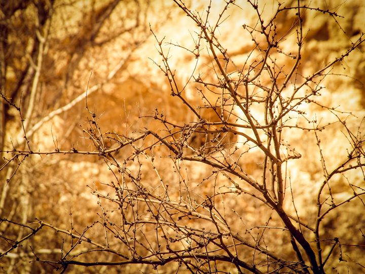 Early Spring in Arizona - TerraScapes Fine Art and Photography