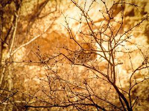 Early Spring in Arizona