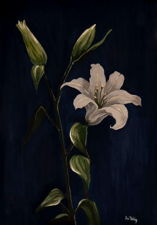 Lily - Ani Cirlig