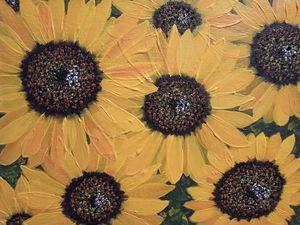 Sunflowers glory