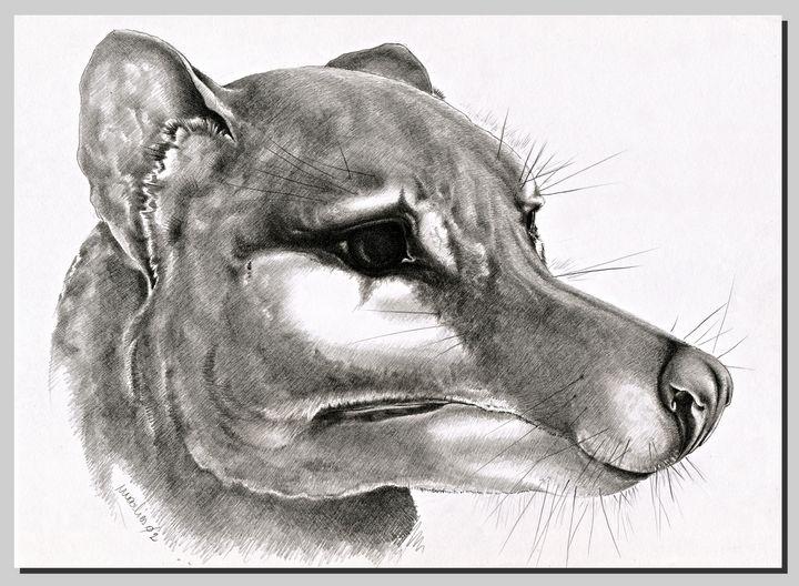 Thylacine Head - tasmanianartist D1g1tal-M00dz