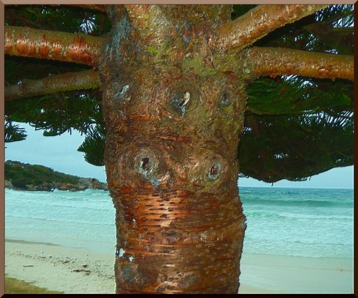 Tree on Beach - tasmanianartist D1g1tal-M00dz