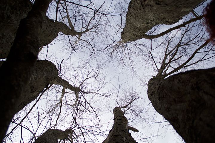 Inside a Tree - Everyday Fun Photography