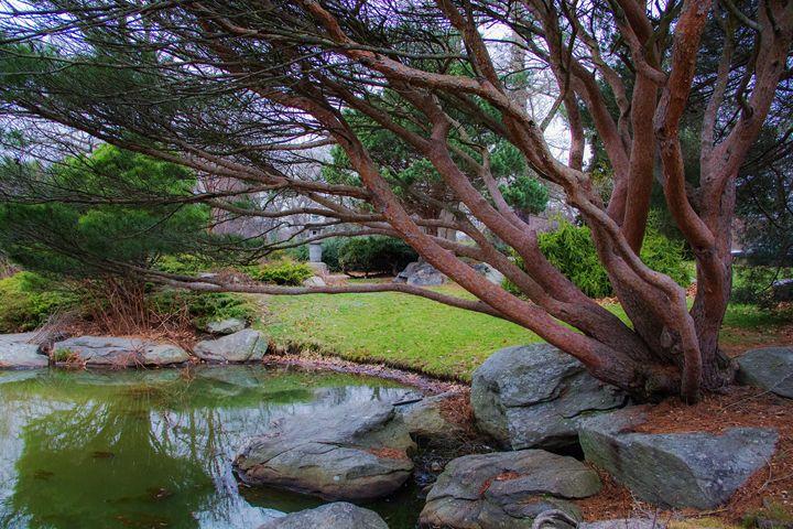 Japanese Garden - Everyday Fun Photography