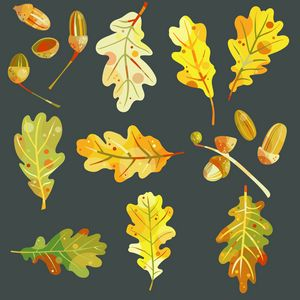 Oak Leaves and Acorns - Nic Squirrell