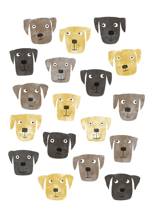 Labrador Retriever Dogs - Nic Squirrell