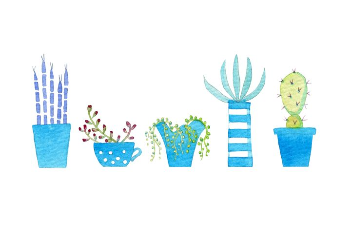 Cacti and succulents - Nic Squirrell