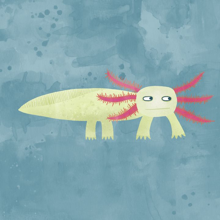 Axolotl - Nic Squirrell