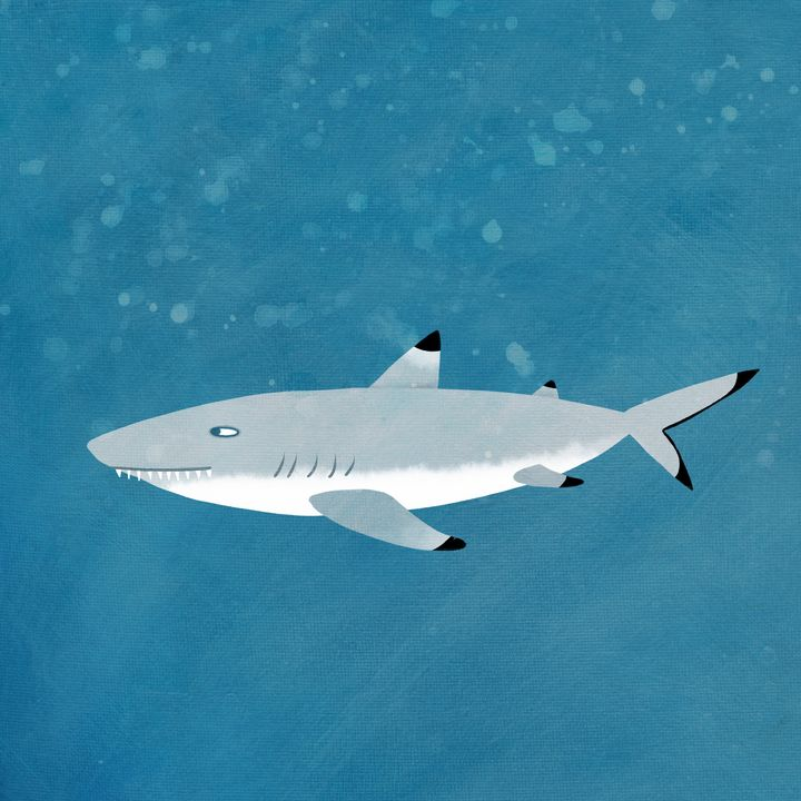 Black Tipped Reef Shark - Nic Squirrell