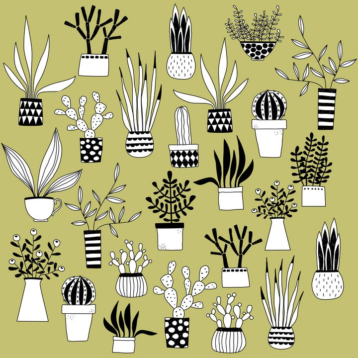 Cactus Drawings - Nic Squirrell