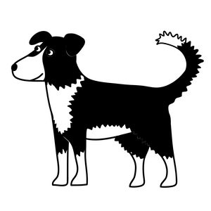 Border Collie Dog - Nic Squirrell