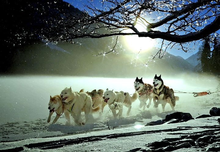 Dog sled - For The Love Of Animals