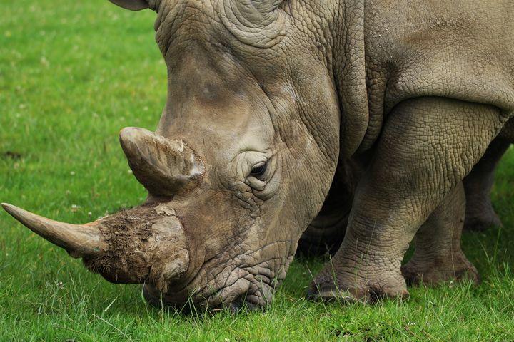 Beautiful Rhino - For The Love Of Animals