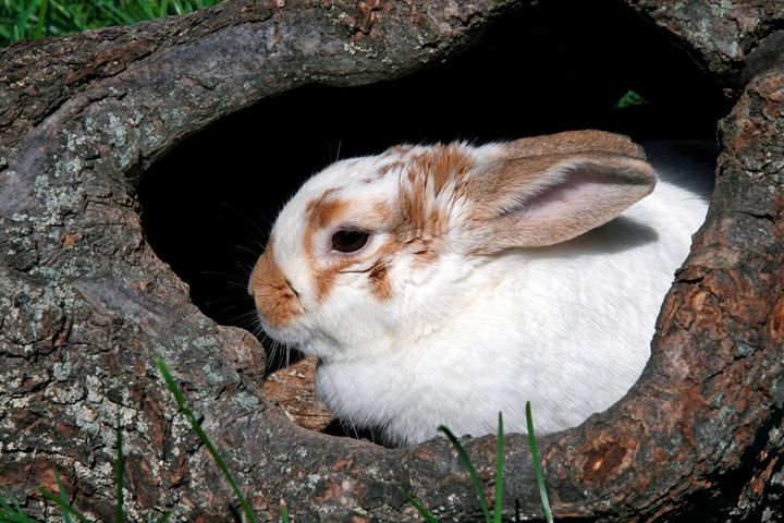 Cute bunny in a hole. - For The Love Of Animals