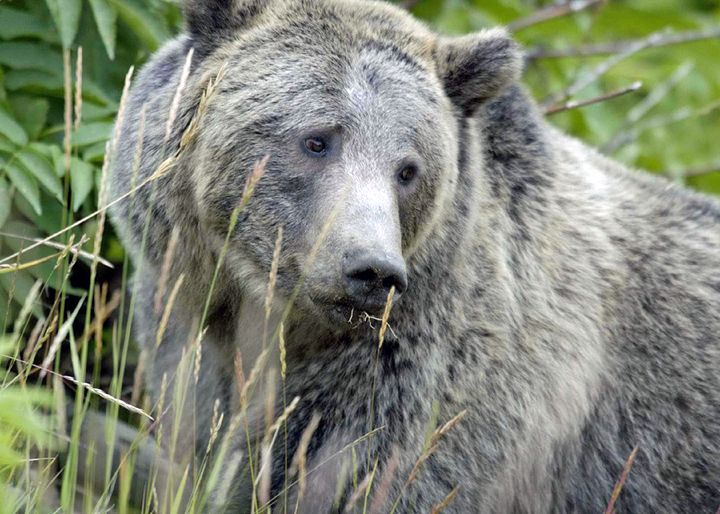 Beautiful bear. - For The Love Of Animals