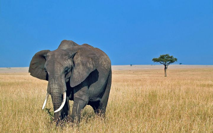 An elephant walking alone - For The Love Of Animals