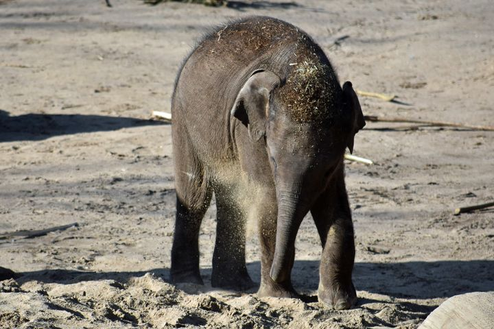 Baby Elephant - For The Love Of Animals