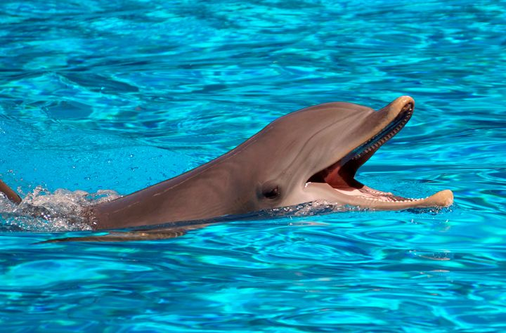 Cute dolphin - For The Love Of Animals