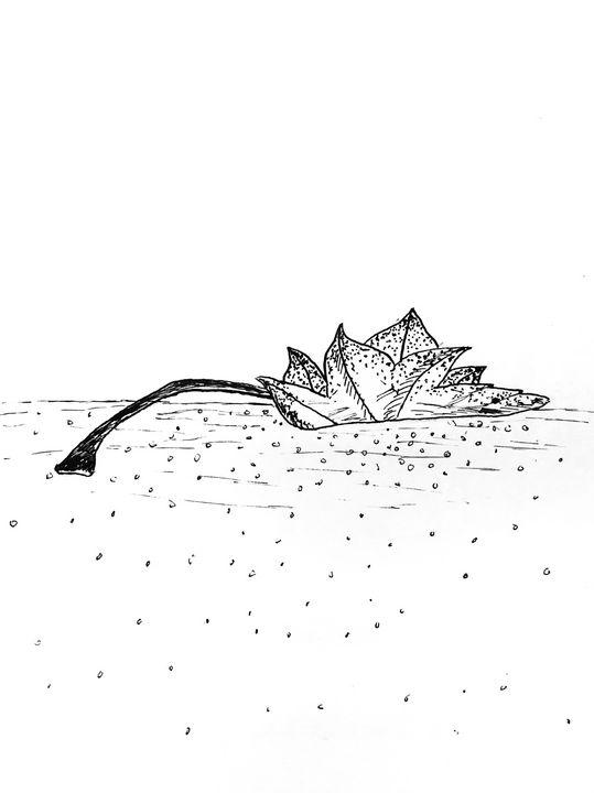 Leaf - Amanda Reid