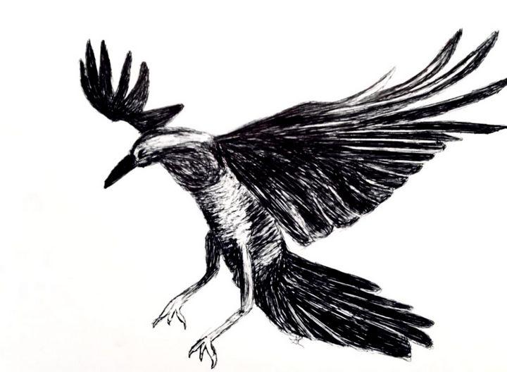 Blackbird - Amanda Reid