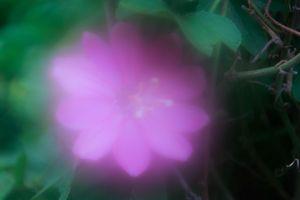 Magenta Blur