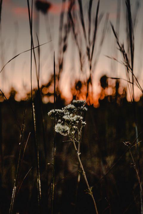 sunset flowers - cody snipes