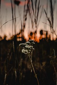 sunset flowers - cody snipes