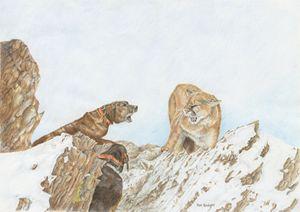 Mountain Lion - Pat Badger
