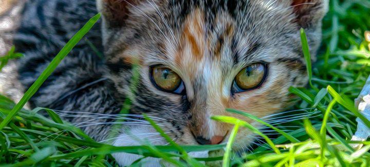 Kitty Stare - MJB DigiArt
