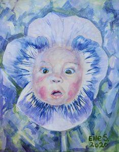 Baby Pansy - Linda Schneider