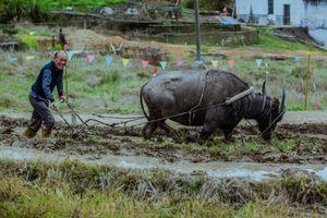 Asian farmer arable land