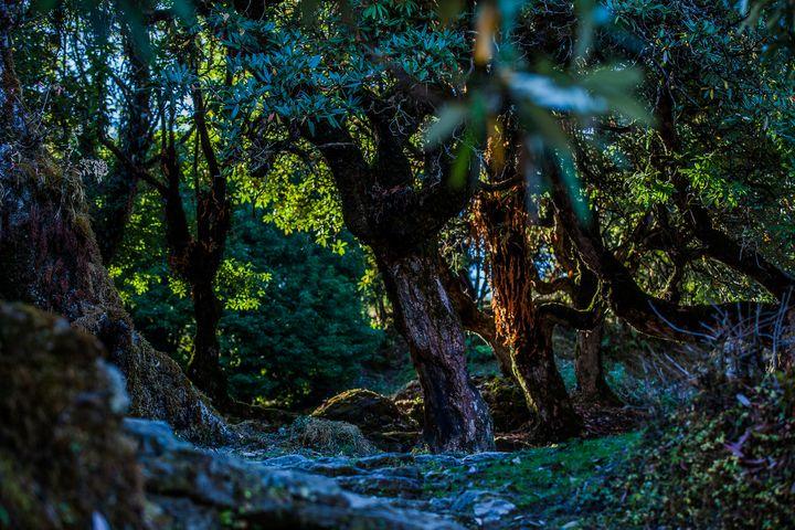 Fantasy Forest - My Secret Art