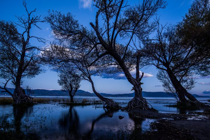 Forest on the lake at dusk - My Secret Art