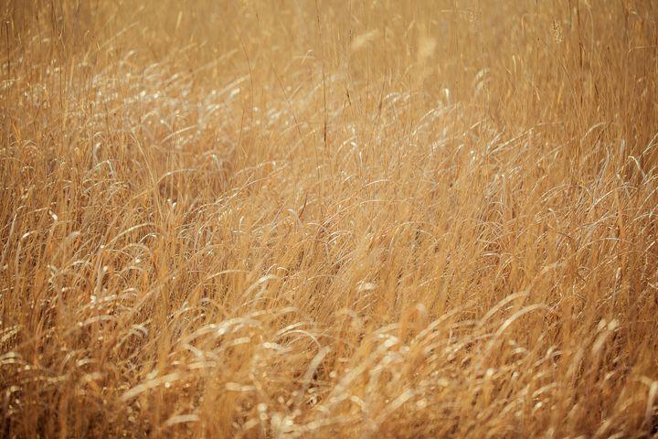 Barren grass - My Secret Art
