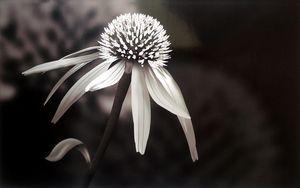 exotic bloom 6