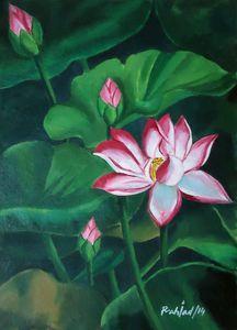blooming lotus 1