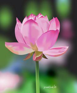 exotic bloom 4