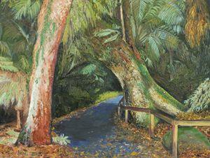 Walk to Russell Falls Tasmania