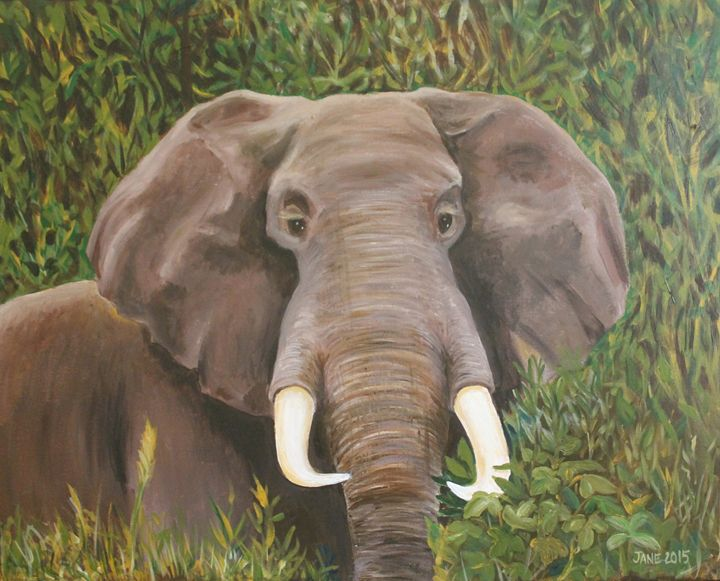 Lets talk about the elephant! - Jane Crawford