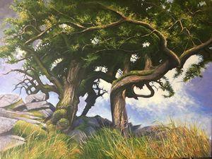 Thorn Tree - Bodmin Moor